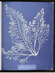 Celebrating Women in Tech: Photography Pioneer Anna Atkins