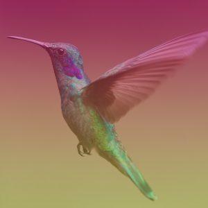 Bird Behind the Brand: The ANNACOLIBRI story